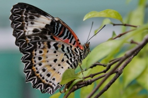The decreasing butterflyeffect