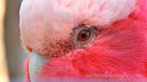 Wallpaper Pink Parrot